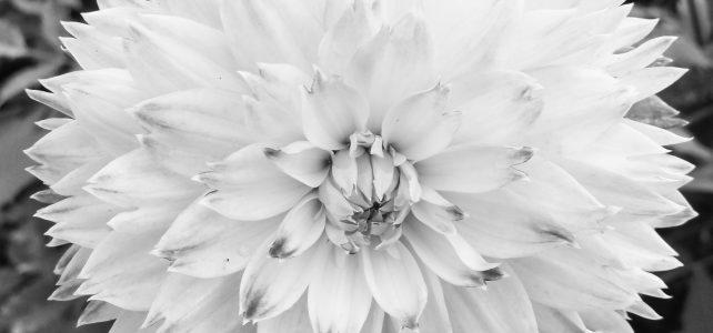 Neujahrsvorsatz: Blumen pflanzen