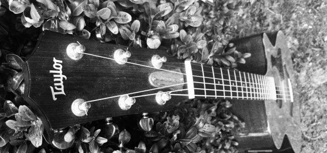 Gitarren sind Herdentiere – Teil 1: Holzrose